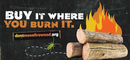 Buy your firewood where you burn it.