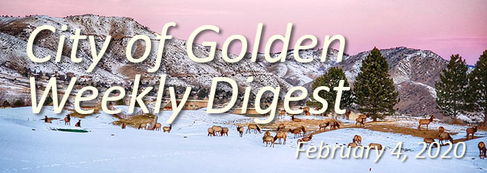 Elk on a snowy landscape for the February 4 Weekly Digest banner