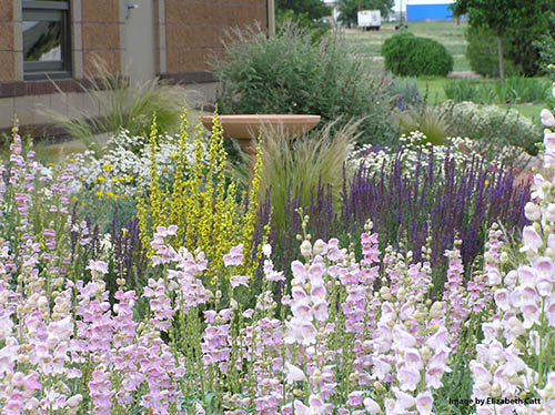 Xeriscaping in Colorado: Weather, Wildlife and Beyond! @ Golden Community Center, Coal Creek Room - North | Golden | Colorado | United States