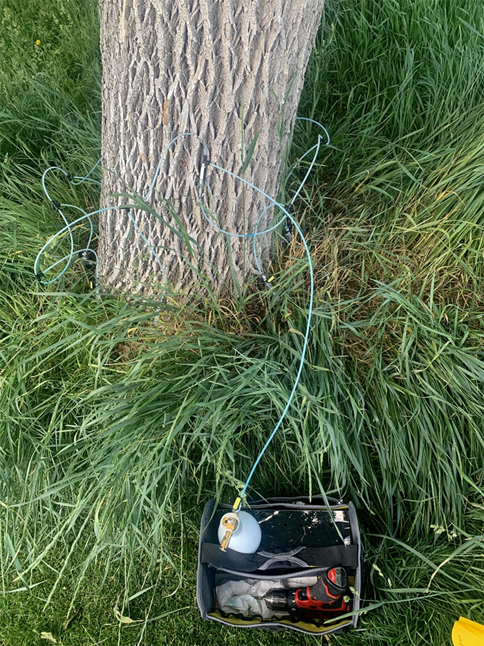 Systemic trunk injection connected to protect a city ash tree from EAB infestation.